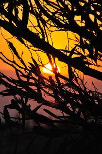 Sonnenuntergang by Sabine Hofmann