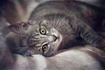 Cat's Eyes #01 by loriental-photography