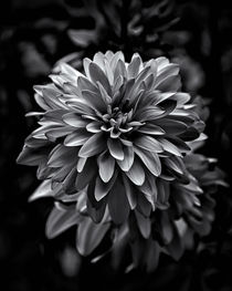 'Backyard Flowers In Black And White 15' by Brian Carson