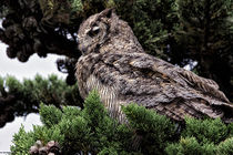 Great Horned Owl by Kathleen Bishop
