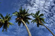 palmen und schäfchenwolken by Lore Müller