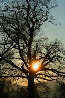 sunset behind a tree von Lore Müller