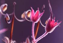 Romantic flower mystic sensation part 2 von mary-berg