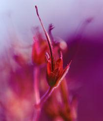 Romantic flower mystic sensation part 3 von mary-berg