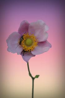 Blütenknipser von Bastian  Kienitz