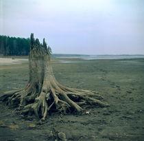 Old stub on a sandy beach of the cold sea von Roman Popov