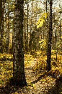Autumn landscape by Roman Popov