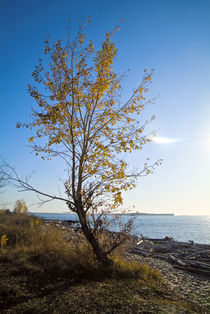 Lanscape with the tree on the coast by Roman Popov