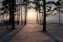 Sunshine in the snow-covered pine wood by Roman Popov