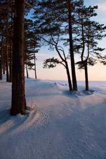 Snow-covered pine wood at sunset by Roman Popov