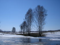 The early spring, thaws snow, naked birches by Roman Popov