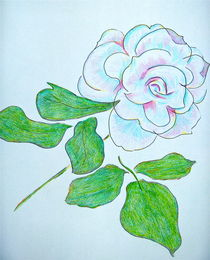 Rainbow White Rose by Christine Chase Cooper