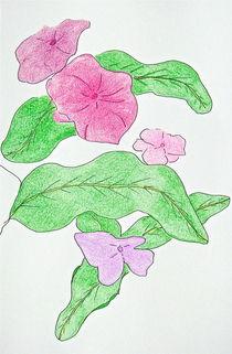 Pink Vinca von Christine Chase Cooper