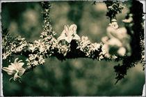 3 flowers von Alexandr Verba
