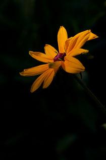 Licht im Dunkel von lisa-glueck