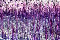Farbspiel violett by lisa-glueck