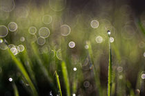Soap Bubble Bokeh by Markus Keinath