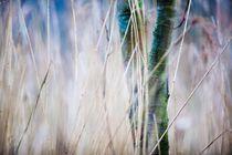 Baum und Gras im Naturschutzgebiet by Markus Keinath