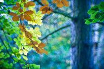 Herbst - Farbenfroh von Markus Keinath
