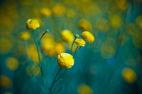 Blumen-kuehl