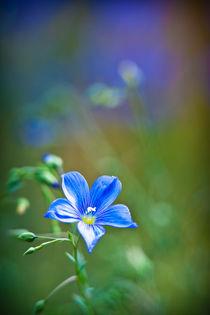 Blau-Grün by Markus Keinath