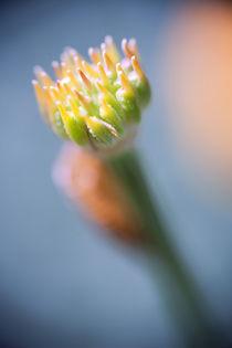 Pflanzen-makro