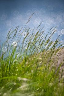 Gräser am Wasser von Markus Keinath