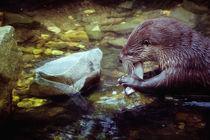 Fischmahlzeit von Barbara  Keichel