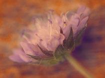 Wild flower von mary-berg