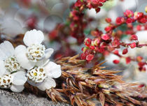 little white flowers with red grass by mary-berg