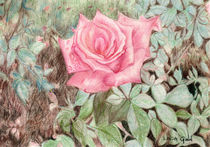 Pink Rose by Linda Ginn