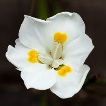 Pretty white orchid von Craig Lapsley