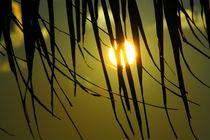Sonne hinter Palme von ann-foto