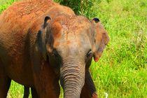Elefantenkind by ann-foto
