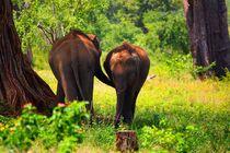 Elefantenfamilie by ann-foto