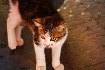 Kätzchen von ann-foto
