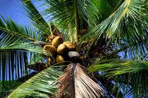 kokosnüsse by Lore Müller