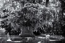Bonavantura Cemetery, Savanna, GA von Ken Dvorak
