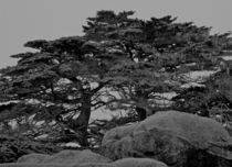 "Point Lobos ""Rocks & Trees"" by Ken Dvorak"