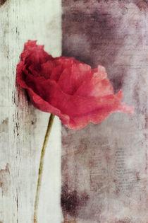 Mohnblume/Poppyflower von Priska  Wettstein