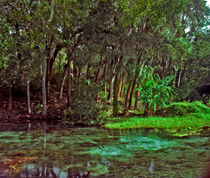 Shoreline. Rainbow Springs, Florida. von chris kusik