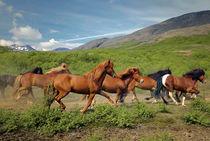 Running horses by Kristjan Karlsson