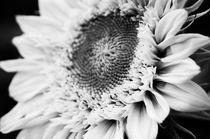 Not so sunny flower von kaotix