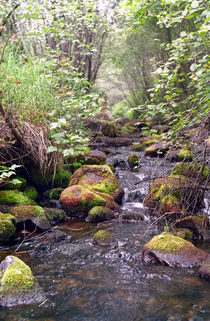 Wood stream with stones moss-grown von Roman Popov