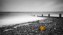 Shellness Bucket by Nigel Jones