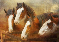 Clydesdales-four-painting-a