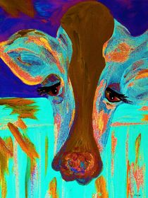 Brown-eyed-blue-cow-long-face