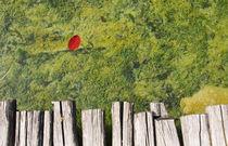 Rotes Blatt von Tobias Koch
