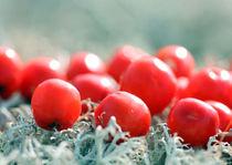 Rowan berries on a blanket of moss  von mary-berg