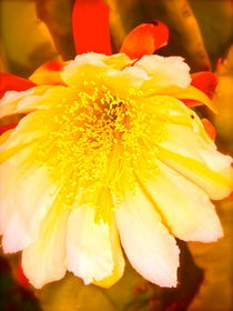Night Blooming Cactus #2 by Christine Chase Cooper